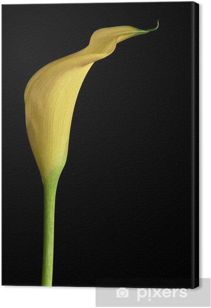 Tableau sur toile Calla fleur - Fleurs