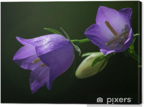 Tableau sur toile Campanula1 - Fleurs