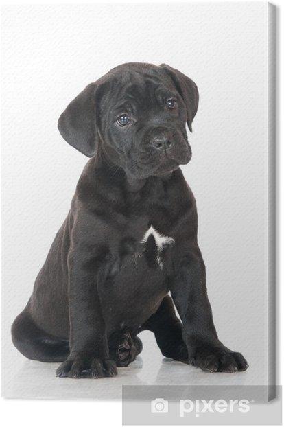 Tableau sur toile Canne noire corso puppy portrait - Mammifères
