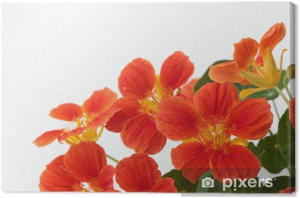 Tableau Sur Toile Capucine De Couleur Orange Vif Pixers Nous