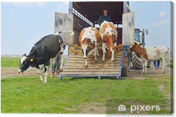 Tableau sur toile Catlle de vaches sauter d'un camion de transport dans la prairie - Agriculture