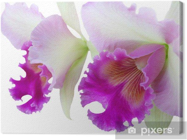Tableau sur toile Cattleya - Fleurs