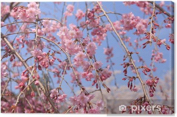 Tableau sur toile Cerisier pleureur Arashiyama - Fleurs