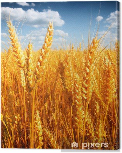 Tableau sur toile Champ de blé contre un ciel bleu - Agriculture