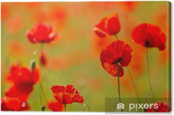 Tableau sur toile Champ de coquelicots rouges - Thèmes