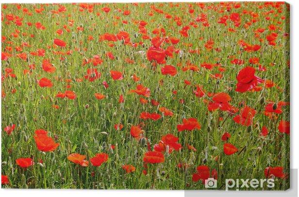 Tableau sur toile Champ de coquelicots rouges - Fleurs