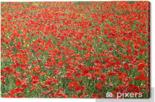 Tableau sur toile Champ de coquelicots - Fleurs