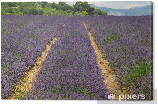 Tableau sur toile Champ de lavande en Provence, beaucoup d'abeilles sur les fleurs - Europe