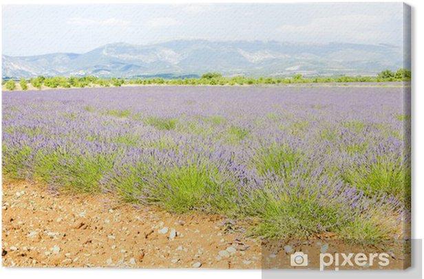 Tableau sur toile Champ de lavande, Plateau de Valensole, Provence, France - Europe