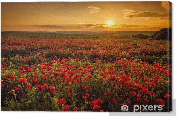 Tableau sur toile Champ de pavot au coucher du soleil - Prés, champs et l'herbes