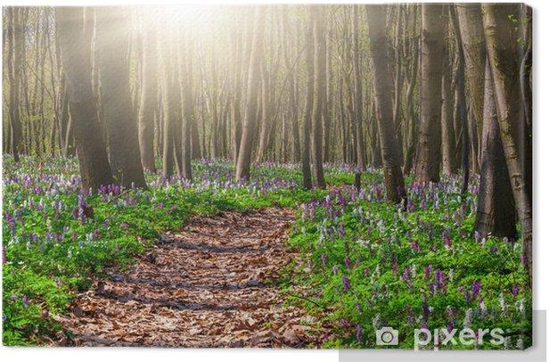 Tableau sur toile Champs de floraison de fleurs dans la forêt au printemps - Forêt