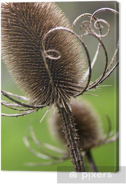 Tableau sur toile Chardon - mauvaises herbes - nature - autocollants - Plantes