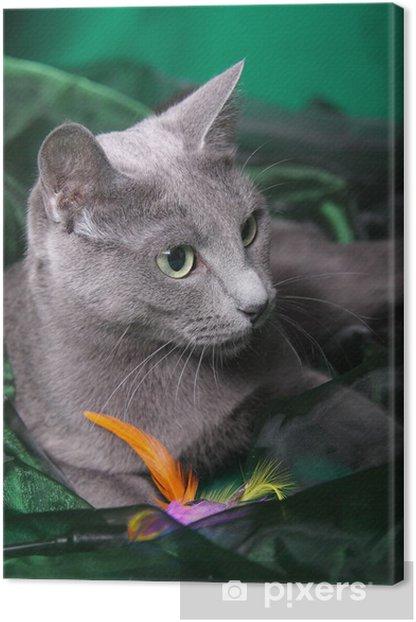 Tableau sur toile Chat bleu russe - Mammifères
