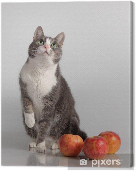 Tableau sur toile Chat gris sur fond avec pomme rouge - Mammifères