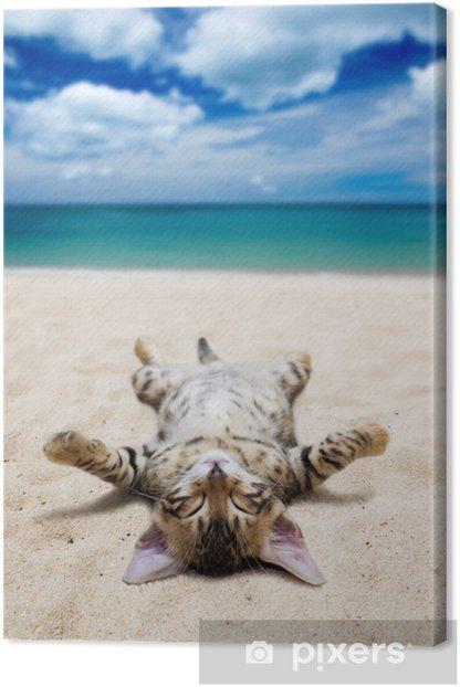 Tableau sur toile Chat sur la plage - Thèmes