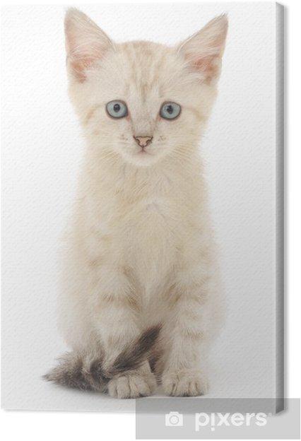 Tableau sur toile Chaton sur un fond blanc - Mammifères