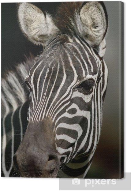Tableau zebre champs prairie 4 tableaux sur toile chef de zebre fermer narrow profondeur de champ