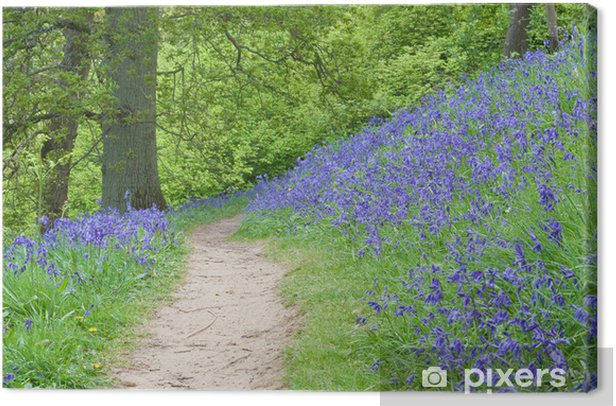 Tableau sur toile Chemin Bluebell - Forêt