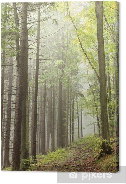 Tableau sur toile Chemin dans la forêt d'automne brumeux - Forêt