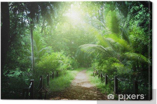 Tableau sur toile Chemin dans la jungle des îles Seychelles - Thèmes