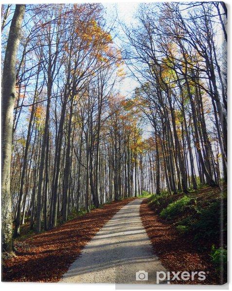 Tableau sur toile Chemin dans les bois de l'automne - Arbres