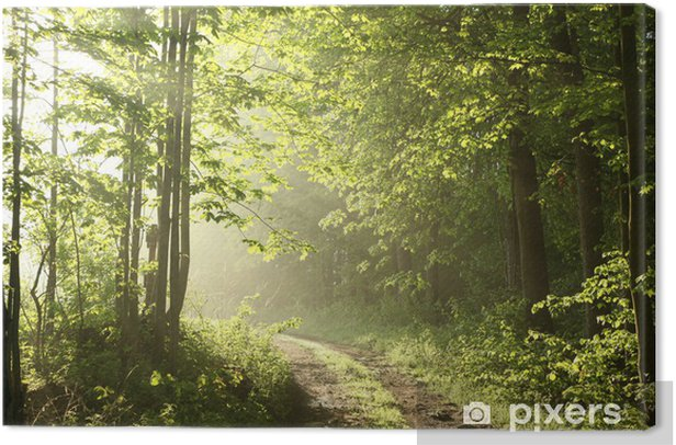 Tableau sur toile Chemin forestier sur une terrasse ensoleillée matin de mai - Thèmes