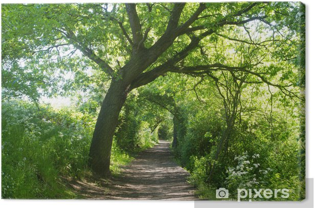 Tableau sur toile Chemin tunnel à travers les arbres - Nature et régions sauvages