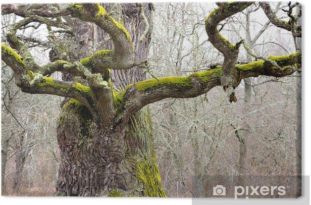 Tableau sur toile Chêne puissant - Saisons