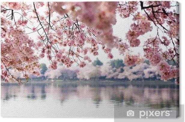 Tableau sur toile Cherry Blossoms plus Tidal Basin à Washington DC - Thèmes