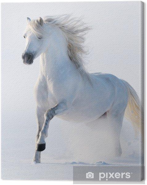 Tableau sur toile Cheval au galop blanc comme neige - Thèmes