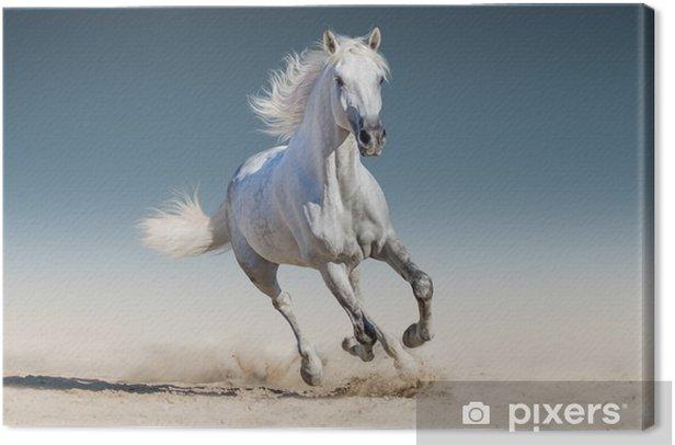 Tableau sur toile Cheval blanc au galop - Animaux