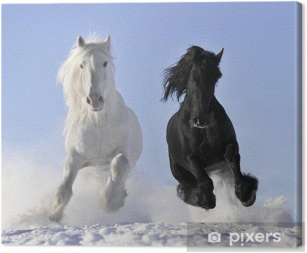 Tableau sur toile Cheval blanc et noir - Destin