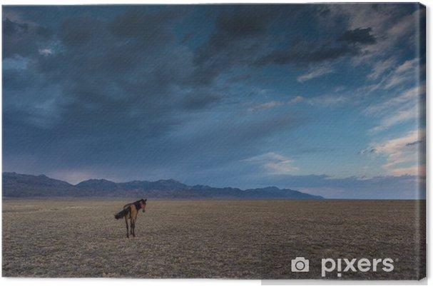 Tableau sur toile Cheval dans la steppe - Mammifères