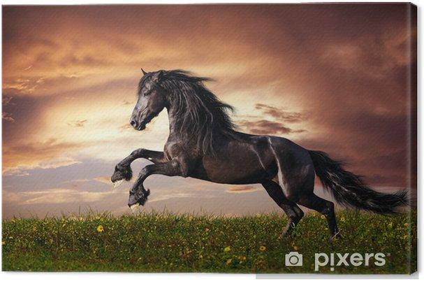 Tableau sur toile Cheval de frison noir au galop -