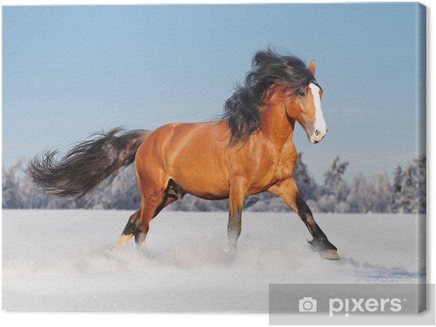 Tableau sur toile Cheval de trait russe en hiver - Mammifères