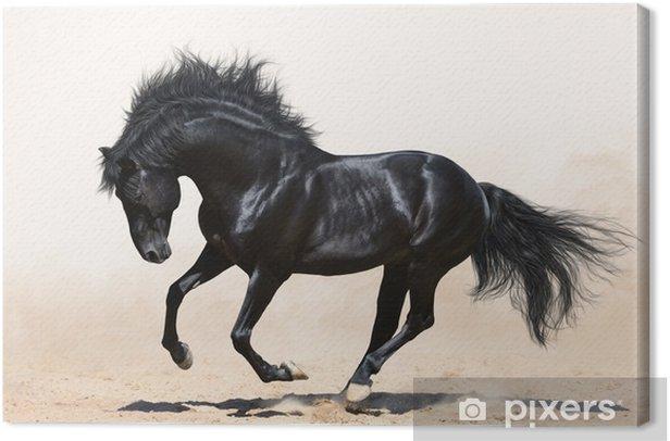 Tableau sur toile Cheval noir au galop - Thèmes