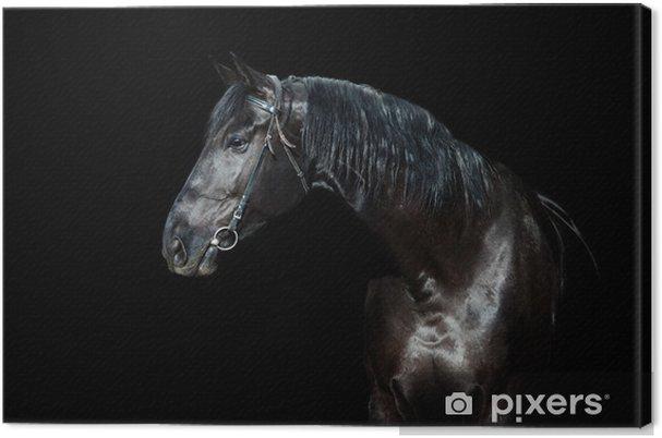 Tableau sur toile Cheval noir isolé sur fond noir - Arrière plans
