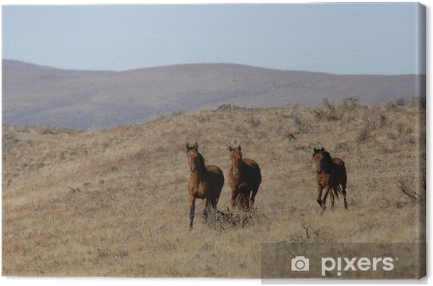 Tableau sur toile Chevaux sauvages debout loin du troupeau - Mammifères