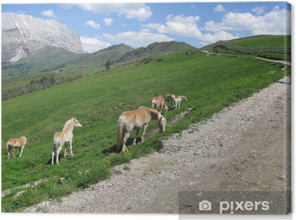 Tableau sur toile Chevaux sur Dolomites Alpes - Europe