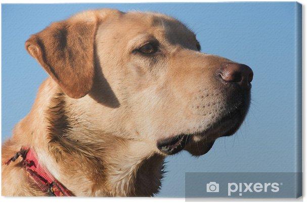 Tableau Sur Toile Chien Babou Labrador Pixers Nous Vivons Pour