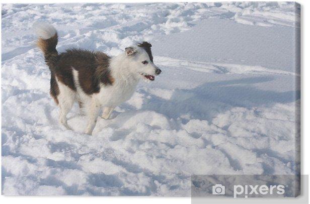 Tableau sur toile Chien dans la neige - Mammifères