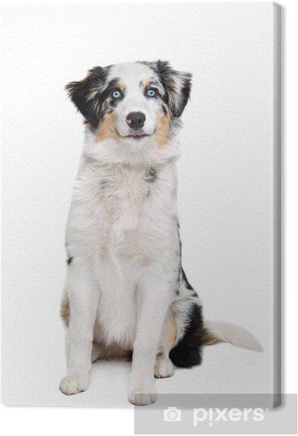 Tableau berger 2 tableaux sur toile chien de berger australien