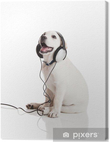 Tableau sur toile Chien écoutant de la musique - Thèmes