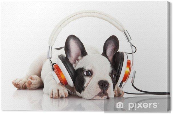 Tableau sur toile Chien écouter de la musique avec un casque isolé sur blanc backgro - Thèmes