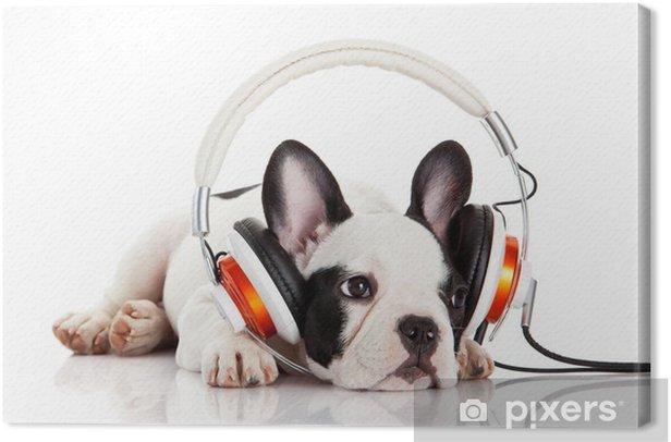 Tableau sur toile Chien écouter de la musique avec un casque isolé sur blanc backgro - Mammifères