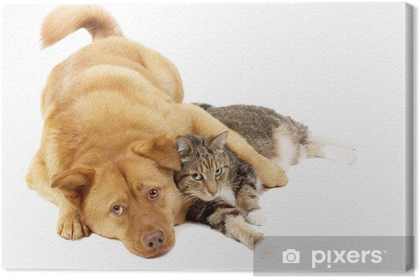 Tableau chat relax 1 tableaux sur toile chien et chat