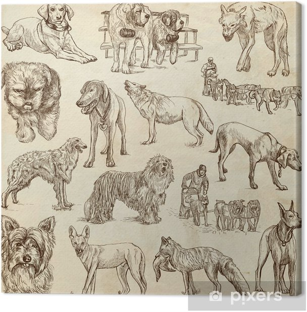 Tableau sur toile CHIENS (canidés) - (n ° 1) - dessins à la main sur papier - Mammifères