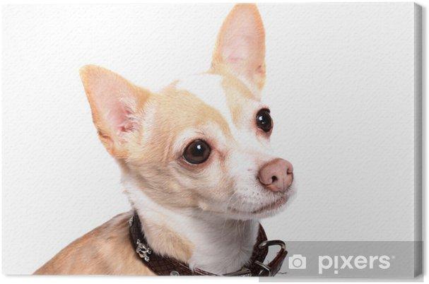 Tableau sur toile Chihuahua chien portrait - Mammifères