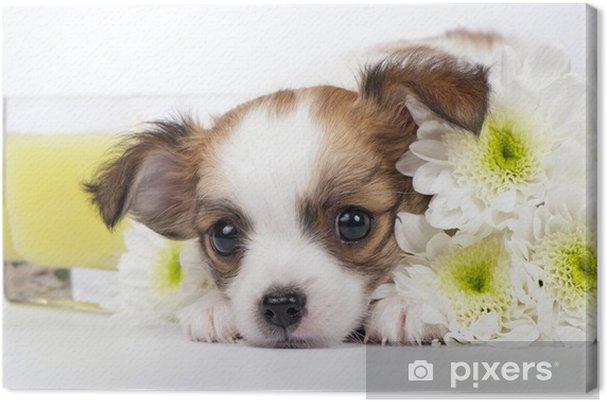 Tableau sur toile Chihuahua chiot avec des chrysanthèmes et bougie jaune - Mammifères