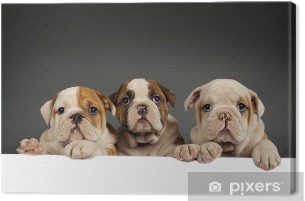 Tableau sur toile Chiots bulldog anglais - Mammifères